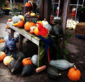 fall plants, local pumpkins, white pumpkins, coloured pumpkings, buy pumpkins, jack o'lantern london, local pumpkins london