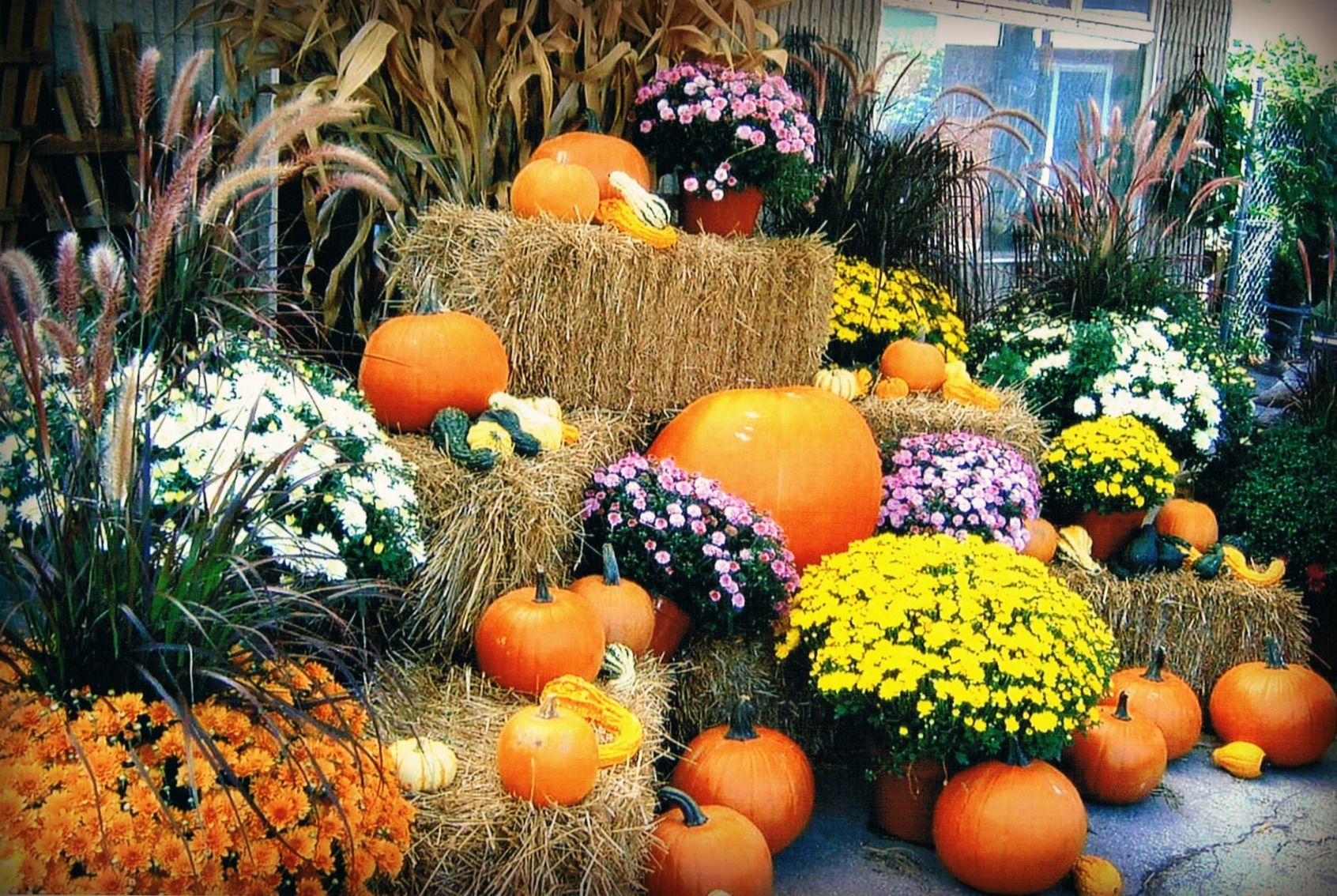 A m garden centre london on outdoor decor fall Fall outdoor decorating with pumpkins