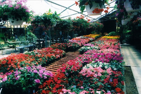 spring garden centre, spring flowers, spring in london ontario, buy spring flowers london