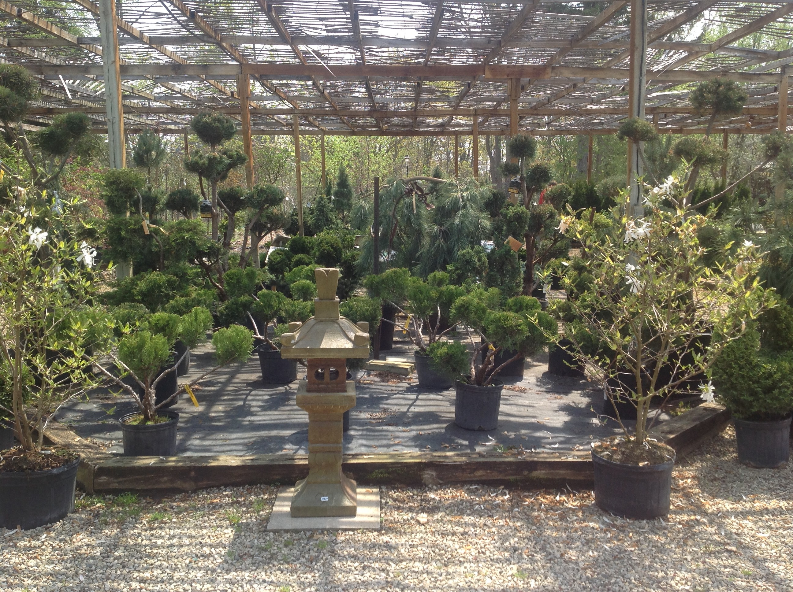 trees for sale, tree nursery, london trees for sale